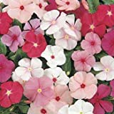 Outsidepride Periwinkle Mix - 4000 Seeds