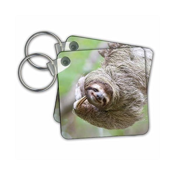 Kc_87171 Danita Delimont - Wildlife - Brown-Throated Sloth Wildlife, Corcovado Costa Rica - Sa22 Jgs0017 - Jim Goldstein - Key Chains -