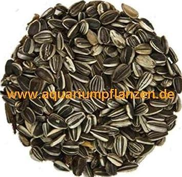 2 5 kg striped sunflower seeds, bird seed