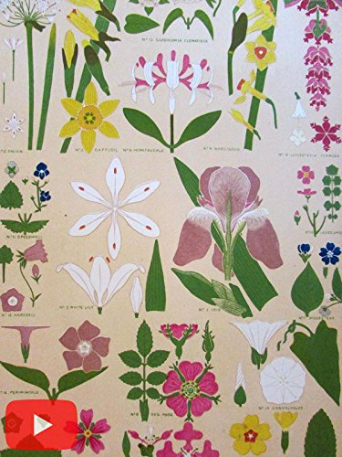 (Owen Jones c.1880 Ornament lot x 10 old prints leaves plants botanicals floral )
