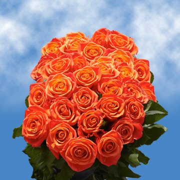 GlobalRose 75 Fresh Cut Orange Roses for Valentine's Day - Impulse Roses - Fresh Flowers Express Delivery - Perfect for Valentine's Day