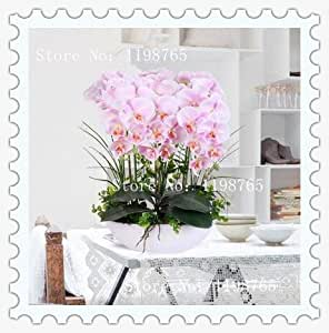 100 PC / bolsa iris rosado semillas, flores jardín perenne populares, semillas de flores de orquídeas raras corte magnífico para la plantación de jardín de casa
