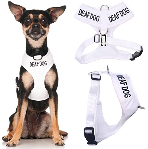 DEAF DOG  White Color Coded Non-Pull Front and Back D Ring P
