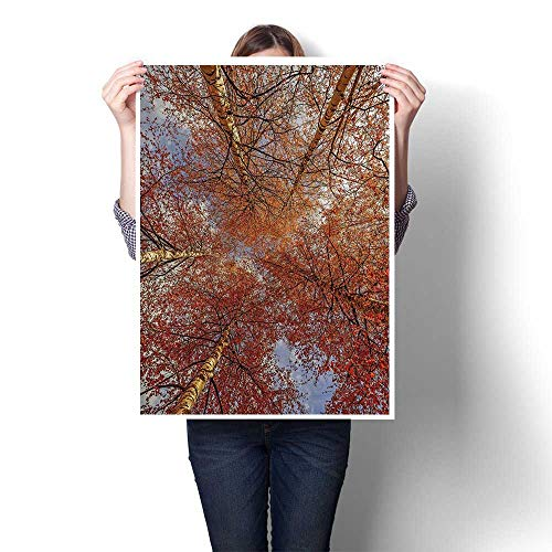 SCOCICI1588 Canvas Print Wall Art Fall Birch Trees Rural Oak in Woodland Peace Envirment Park Foliage Artwork for Wall Decor,16