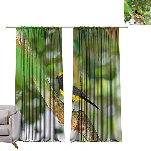 WinfreyDecor Bedroom Balcony Living Room Curtain Beautiful Yellow Bird Sultan Tit (Melanochlora sultanea) Stand Suitable for Bedroom Living Room Study, etc.W108 x L72
