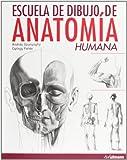 Escuela de dibujo de anatomía humana