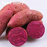 Hot Sale! Annual Fruit And Vegetable Seeds Purple Sweet Potato Seeds Diy Home Garden Bonsai Plant 20 Pcs/lot Farm Fruit Plant Seeds of hope