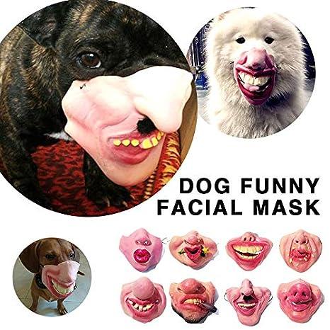 Aprettysunny Máscara de Halloween del Perro Enmascarado Uniforme Duradero Código 8 Estilo Broma Bromeando Media Máscara: Amazon.es: Productos para mascotas