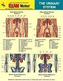 Urinary System Anatomy EXAM Notes (EXAM Notes Reference Charts)