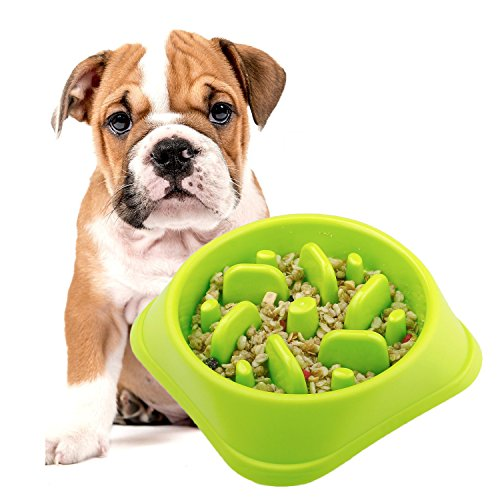 (Slow Feeder Bowl,DotPet Fun Interactive Feeder Bloat Stop Dog Bowl Preventing Feeder Anti GulpingDrink Water Bowl Fan Shape Healthy Eating Diet For Puppy Dog Pet (Green))