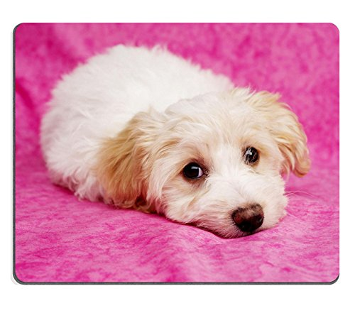 Liili Mouse Pad Natural Rubber Mousepad IMAGE ID: 17693100 Sleepy Bichon Frise cross puppies laid on a pink mottled background