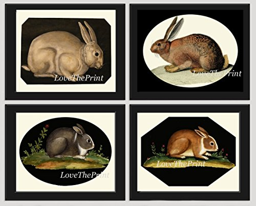 Bunny Rabbit Print SET of 4 Beautiful Antique Rabbits Animal Nature Natural Science Illustration Room Wall Home Interior Decor to Frame Unframed GNT