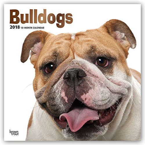 Bulldogs Hanging - Bulldogs 2018 12 x 12 Inch Monthly Square Wall Calendar with Foil Stamped Cover, Animals Dog Breeds Terriers (Multilingual Edition)