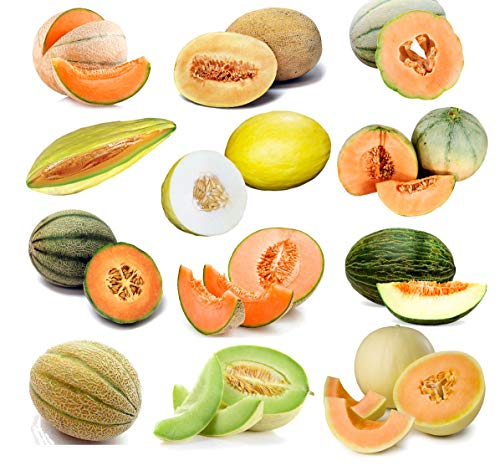 50+ Melon Mix Seeds ORGANICALLY Grown 12 Varieties Non-GMO Delicious and Healthy, Grown in USA. Rare, Super Profilic and Delicious! (Banana Melon Seeds)