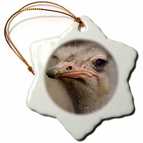 3dRose orn_116211_1 Silly Cute Ostrich Face Nature Animal Photo-Snowflake Ornament, Porcelain, 3-Inch (Ostrich Ornament)