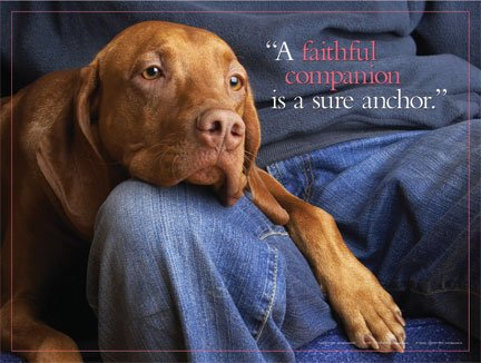 """Motivational Inspirational Poster for Dog Owner, Animal Pet Lover; Rescue, No Kill Advocate. Features the quote, """"A faithful companion is a true anchor."""" 18″ x 24″ LAMINATED Poster Print."""