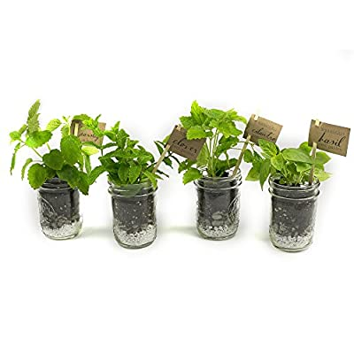 MakersKit Mason Herb Garden Gift Set, Savory Edition, Summer Savory, Dill, Chervil and Arugula
