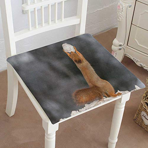 Mikihome Indoor/Outdoor All Weather Chair Pads red Squirrel Stand in Snow with snowb Seat Cushions Garden Patio Home Chair Cushions 16