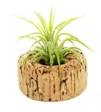 Hinterland Trading Gifts & Decor Indoor Plants