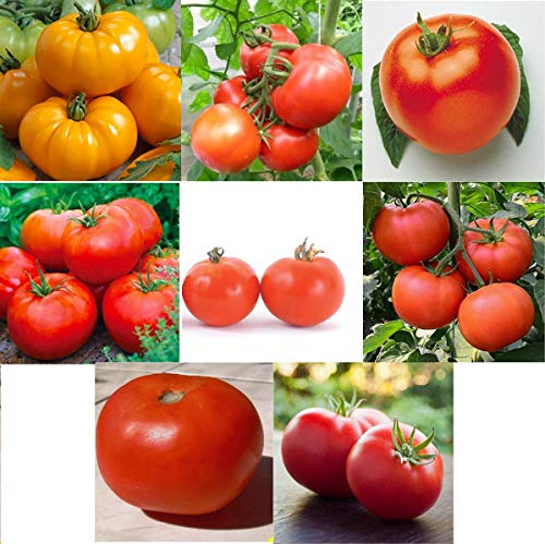 David's Garden Seeds Collection Set Tomato Determinate TD9221 (Multi) 8 Varieties 400 Seeds (Non-GMO, Organic, Heirloom, Open Pollinated)