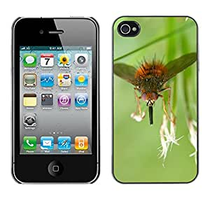 Just Phone Cases Slim Protector Hard Shell Cover Case // M00128537 Fly Insects Macro // Apple iPhone 4 4S 4G