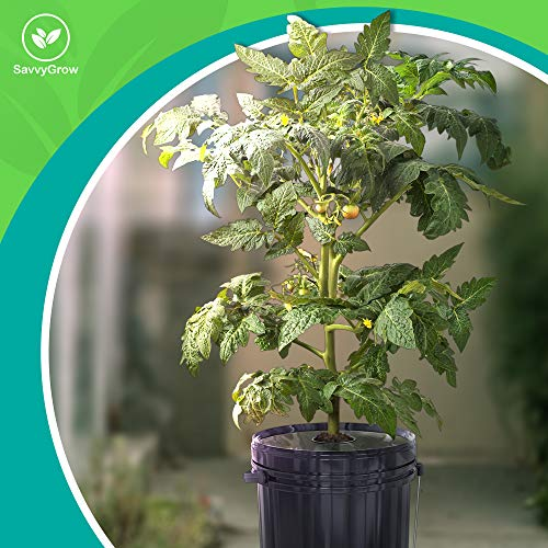 SavvyGrow DWC Hydroponics Growing System-Kit - Large 5 Gallon 6 Buckets w/Air Pump Airstone - Complete Hydroponic Setup for Indoor Tomatoes, Peppers, Melons, Bean - Grow Super Fast at Home (6 Bucket)