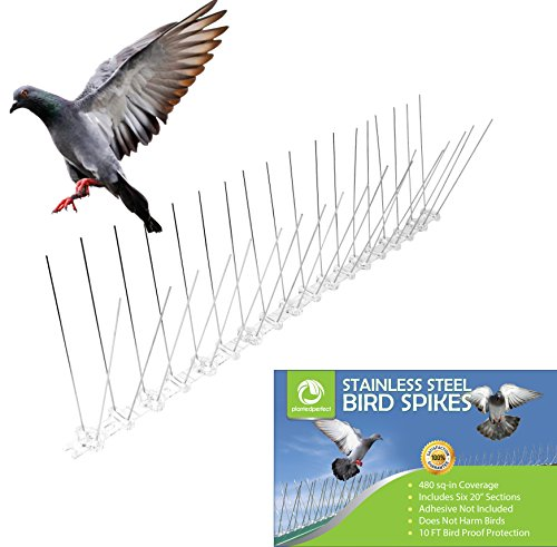 STAINLESS STEEL BIRD SPIKES - Durable Pigeon Repellent - Great Deterrent for (Bird Deterrent Spikes)
