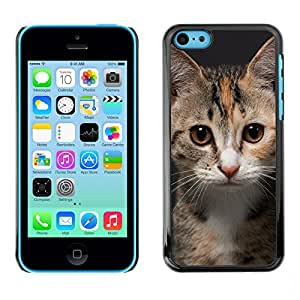 Hot Style Cell Phone PC Hard Case Cover // M00100347 card for animals identity photo // Apple iPhone 5C