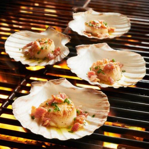 Scallop Shells Juego de 6 conchas extragrandes de 10 a 13 cm