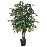 Vickerman TBU0640-06 Ming Aralia Bush, 4', Green