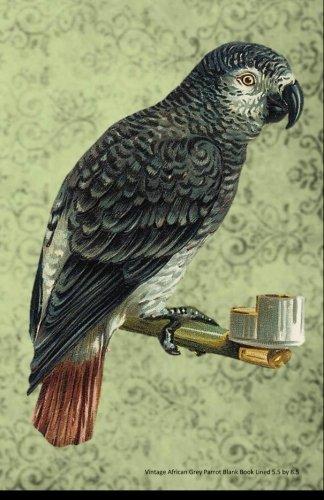 African Grey Parrots Pets - 9