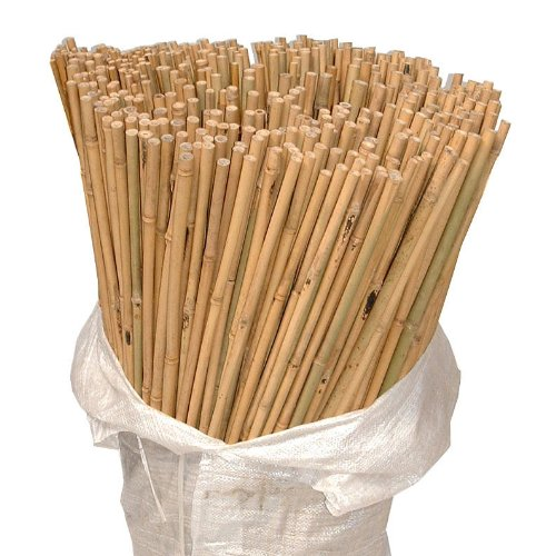 2FT 3FT 4FT 5FT 6FT Bamboo Garden Canes Strong Thick Quality Support Green Canes (Natural, 3FT X 100) funkybuys