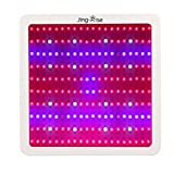 Jing-Rise 2000W Square Level B Double Chips LED Grow Light Full Spectrum for Greenhouse Hydroponic Indoor Plant Veg and Flower