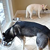 PetFusion Elevated SinglePod Magnetic Dog Feeder