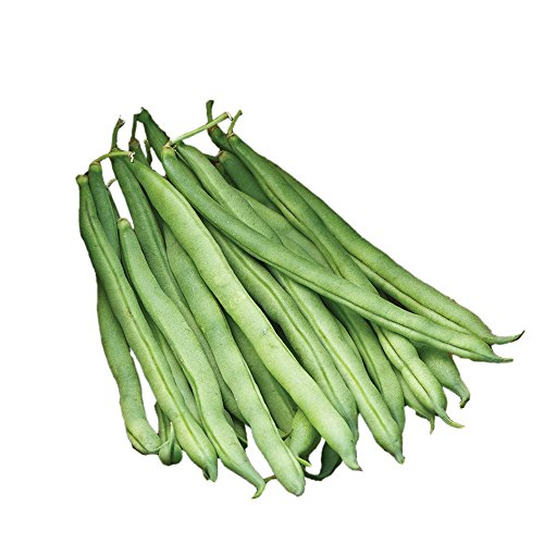 - Burpee Big Kahuna Bush Bean Seeds 2 ounces of seed