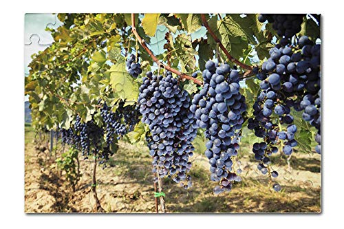Tuscany, Italy - Wine Grapes Closeup - Photography A-92506 (8x12 Premium Acrylic Puzzle, 63 Pieces)