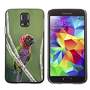 Be Good Phone Accessory // Dura Cáscara cubierta Protectora Caso Carcasa Funda de Protección para Samsung Galaxy S5 SM-G900 // parrot tropical jungle bird nature branch
