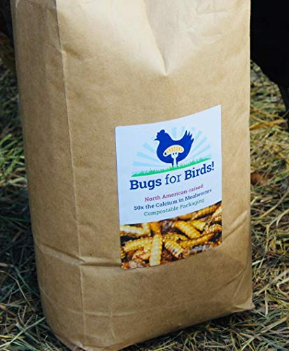 NORTH AMERICAN-RAISED Bugs for Birds! Better Than Mealworms - Dried BSF Larvae - Natural Chicken Feed Supplement / Wild Bird Treats - for Healthy Eggs and Feathers! (4lbs) (Best Egg Laying Breeds)
