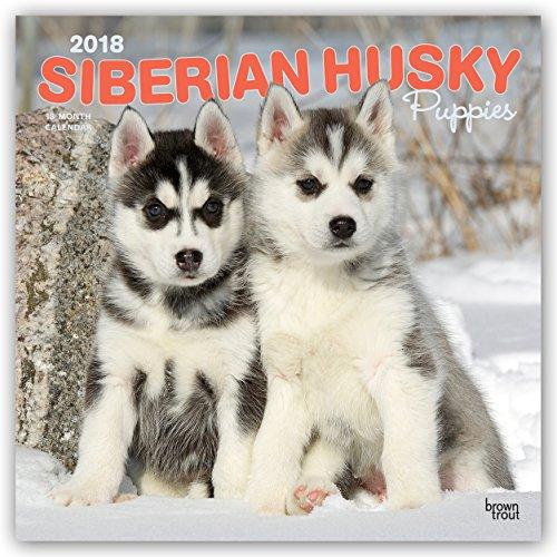 Husky Puppy - 6