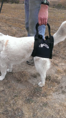 Dog Lift/support Harness: Airlift One Size Small Walkabout Back Harness (Up And Out Lift Harness compare prices)