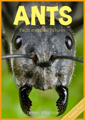 Ants: Fun Facts and Cool Pictures. Insect Photos & Insect Facts for Kids. (Animal Photo Books for Kids. Book 6) -
