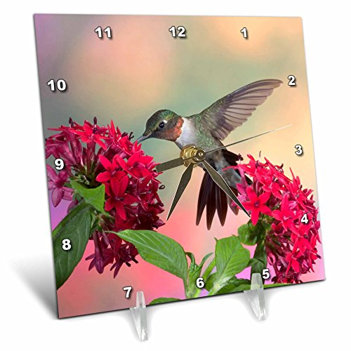 3dRose Ruby-Throated Hummingbird on Red Pentas. Marion, Illinois, USA.-Desk Clock, 6 by 6