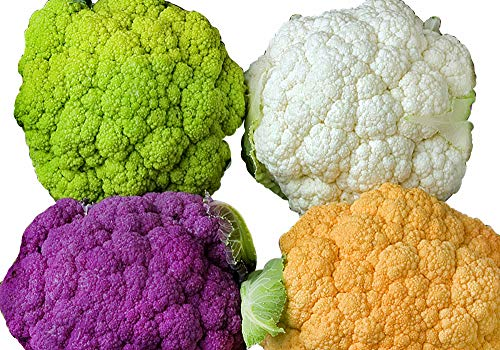 Please Read! This is A Mix!!! 50+ ORGANICALLY Grown Cauliflower Mix Seeds Heirloom Non-GMO 4 Varieties Purple Green Yellow, Delicious, Healthy, from USA ()