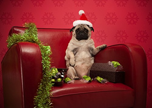 Holiday Pug Cards (Pug Cards Christmas)
