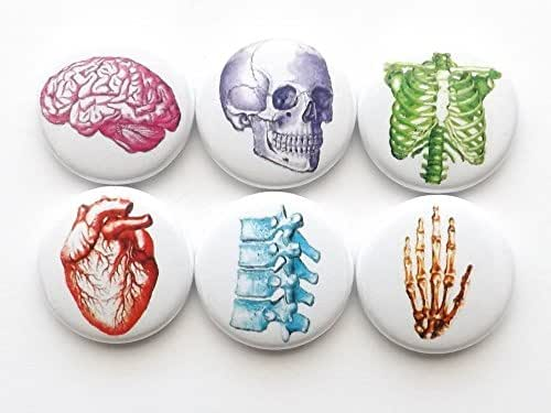 Colorful Anatomy magnets 1 inch funky skull brain hand anatomical heart party favors stocking stuffers med student graduation gift