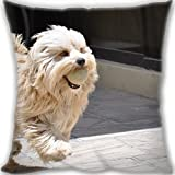 HARLAN Custom Zippered Throw Pillow 35x35cm(14x14inch) Mini Size 300g(0.66lb) (Twin sides Print)- dog playful ball Leaning Cushion