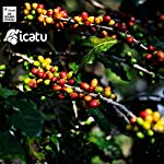 CAFES-GUILIS-DESDE-1928-AMANTES-DEL-CAF-Caff-Brasiliano-in-Grani-Arabica-Finca-Naturale-Icatu-Minas-Gerais-1-Kg