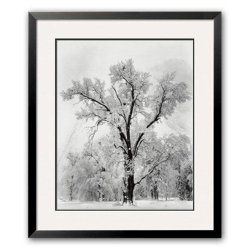 (Art.com Oak Tree, Snowstorm, Yosemite National Park, 1948 Framed Art Print by Ansel Adams)