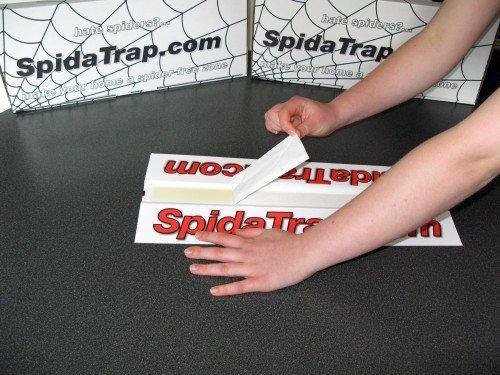 SpidaTrap - Packung mit 10