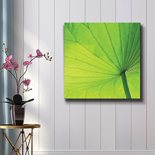 Green Broad Leaf in Closeup Detail Study of Light Nature Series